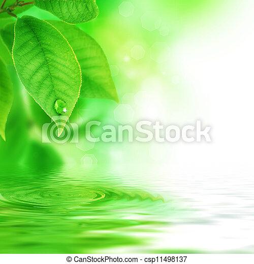 Beautiful Nature Scene - csp11498137