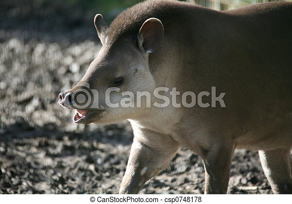 Brazilian tapir - csp0748178