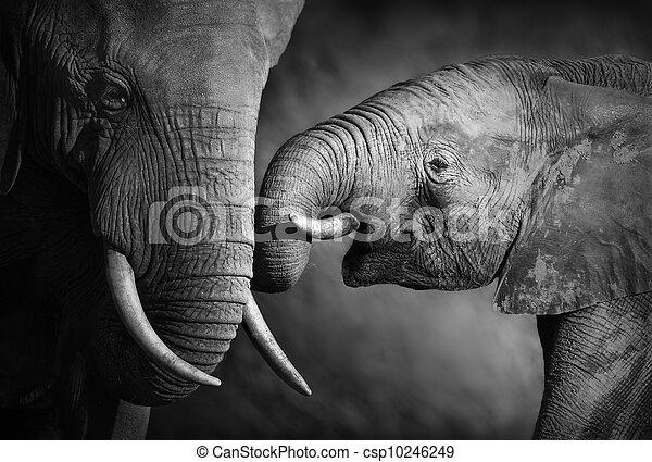 Elephant affection (Artistic processing) - csp10246249