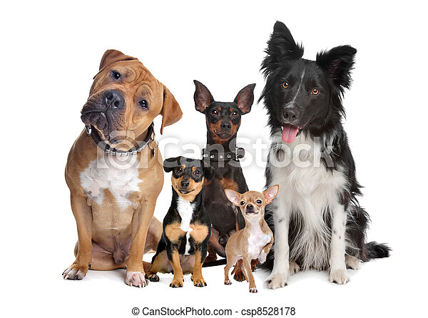 group of five dogs - csp8528178