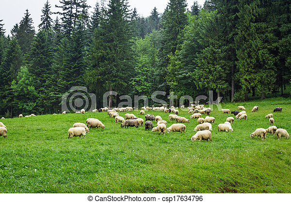 Herd of mountain sheep on the hill - csp17634796
