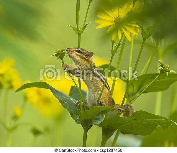 Little nature lover - csp1287450