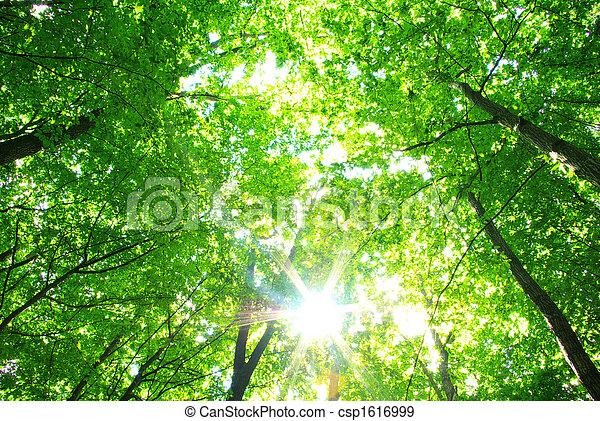 nature - csp1616999
