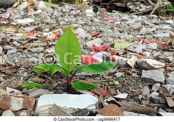 plant in pollution - csp9466417