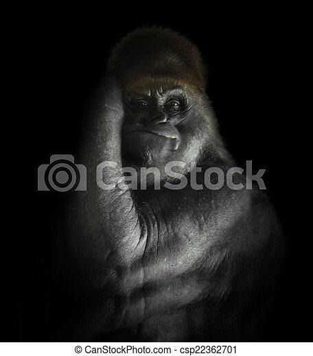 Powerful Gorilla Mammal Isolated on Black - csp22362701