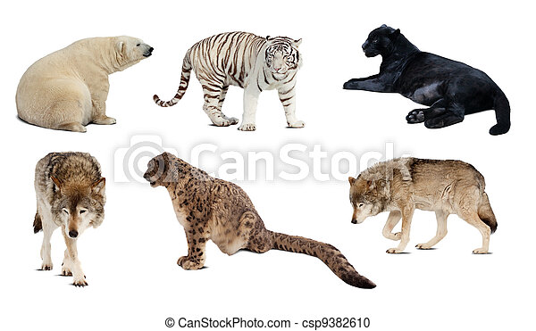 Set of Carnivora mammal. Isolated over white - csp9382610