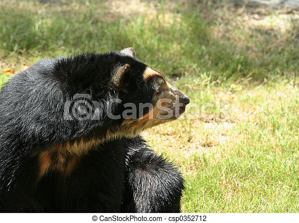 Spectacled Bear Looking Side - csp0352712